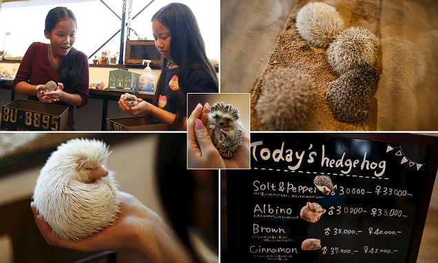"A board shows a selection of hedgehogs for sale at the Harry hedgehog cafe in Tokyo, Japan, April 5, 2016. In a new animal-themed cafe, 20 to 30 hedgehogs of different breeds scrabble and snooze in glass tanks in Tokyo's Roppongi entertainment district. Customers have been queuing to play with the prickly mammals, which have long been sold in Japan as pets. The cafe's name Harry alludes to the Japanese word for hedgehog, harinezumi. Prices are shown in yen. REUTERS/Thomas Peter SEARCH ""HEDGEHOG THOMAS"" FOR THIS STORY. SEARCH ""THE WIDER IMAGE"" FOR ALL STORIES"